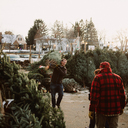 2019 Tree Lot photo album thumbnail 1